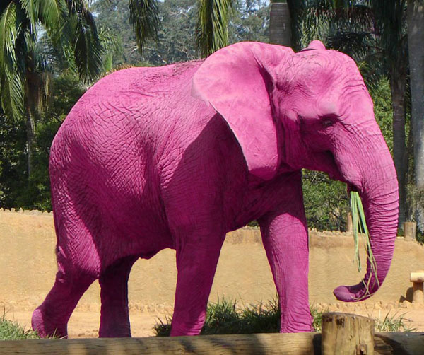 pink-elephant-small
