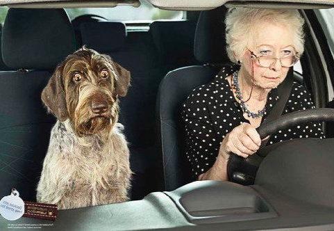 дама с собакой, юмор